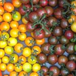 heirloom tomatoes kc photo